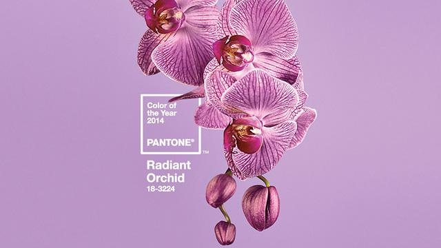 RadiantOrchid02